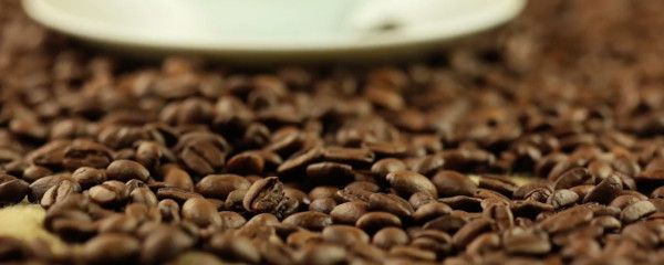Learn about our roasts