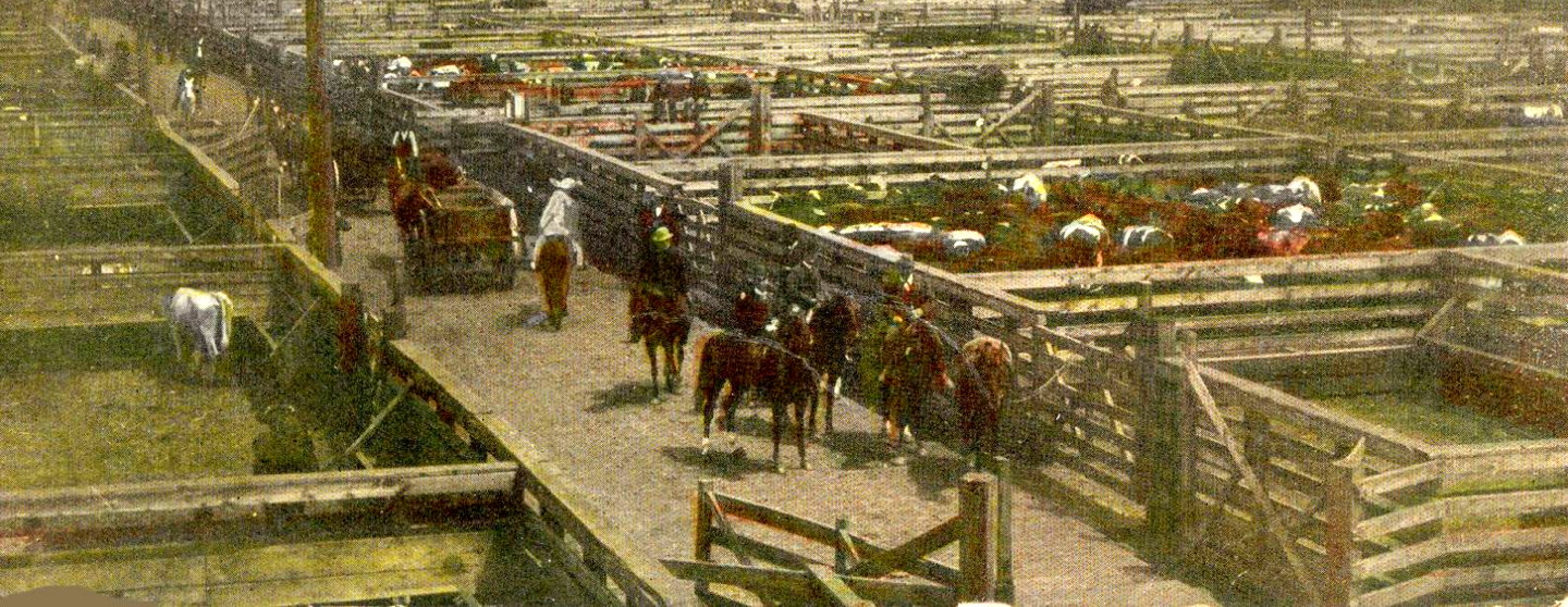 The Chicago Stockyards