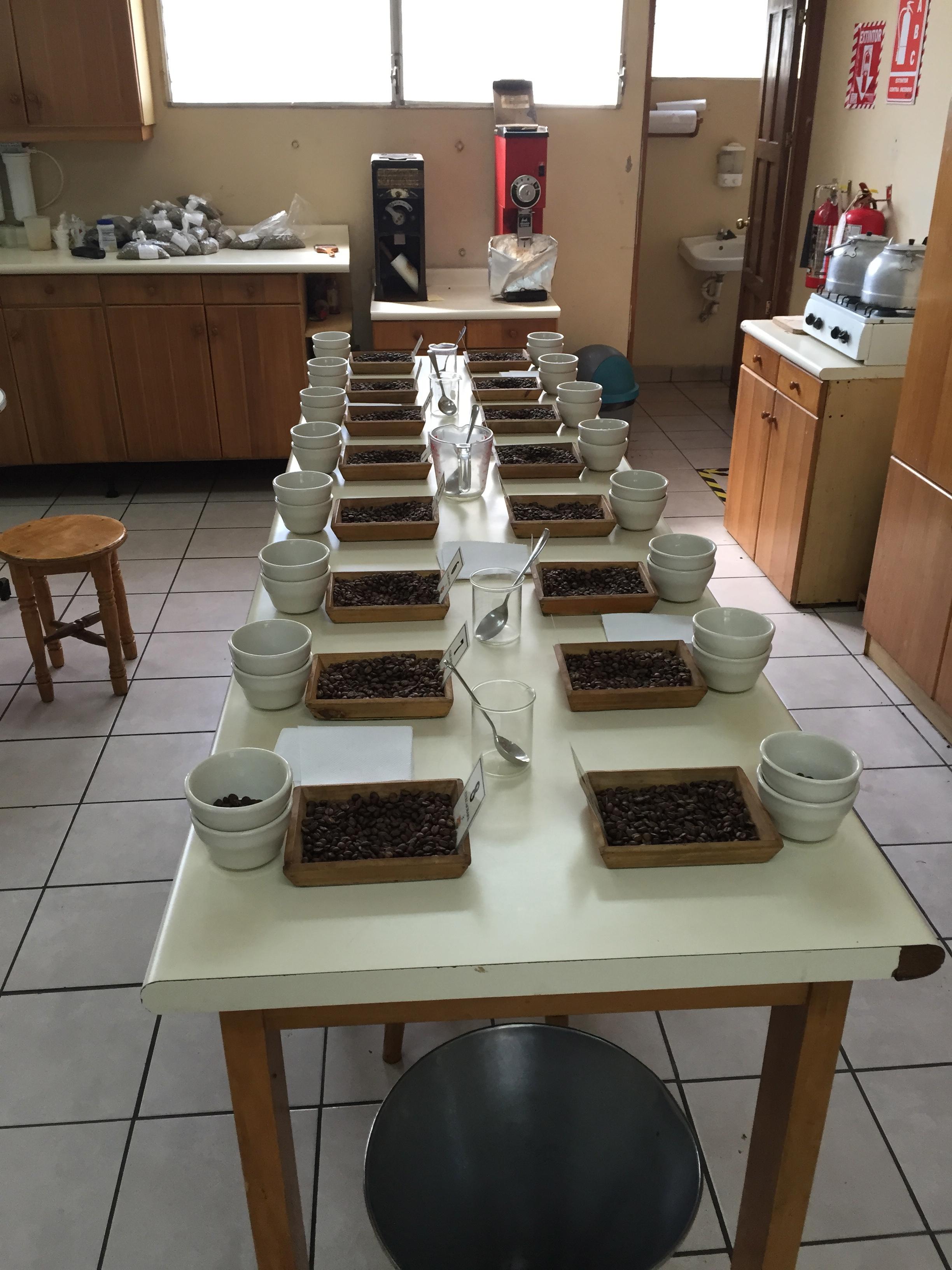 El Salvador Origin Trip 2016 · Bridgeport CoffeeBridgeport Coffee